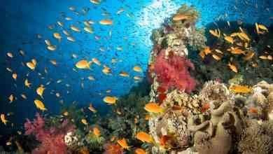 Photo of معلومات عن البحر الأحمر .. ما سر هذا الاسم وكيف تبدو الحياة البحرية به؟