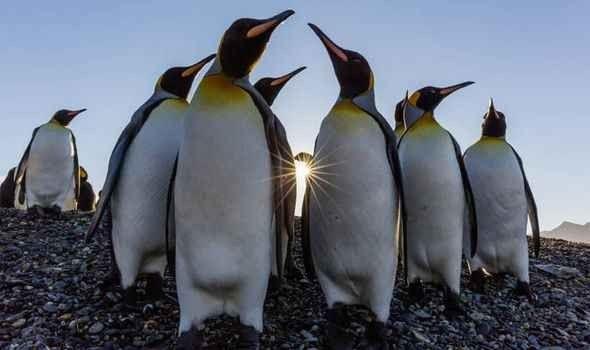 طبيعة البطريق