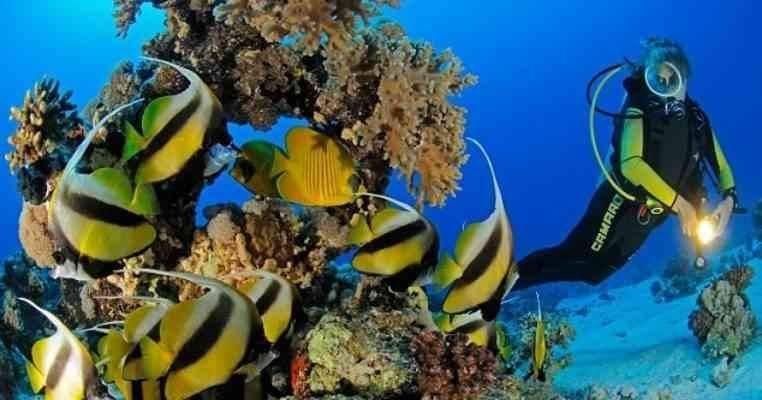 معلومات عن البحر الأحمر (الحياة البحرية)
