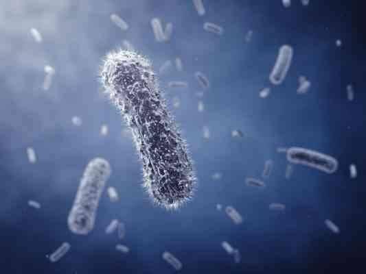 خصائص البكتيريا