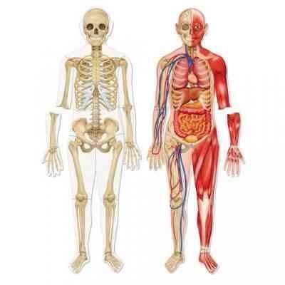 حقائق عن الجسم