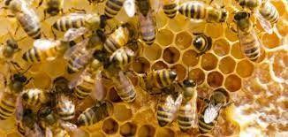 Photo of معلومات عن النحل …تعرف على بعض أنواع النحل وأفضل أنواعها النوع المصري و10 فوائد للعسل