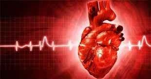 حقائق عن القلب
