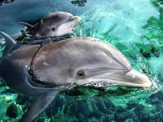 صغير الدلفين .. حقائق عن الدلافين