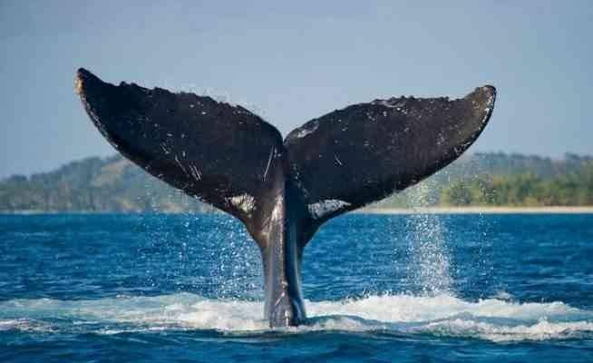 حقائق عن الحيتان