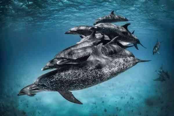حقائق عن الدلافين