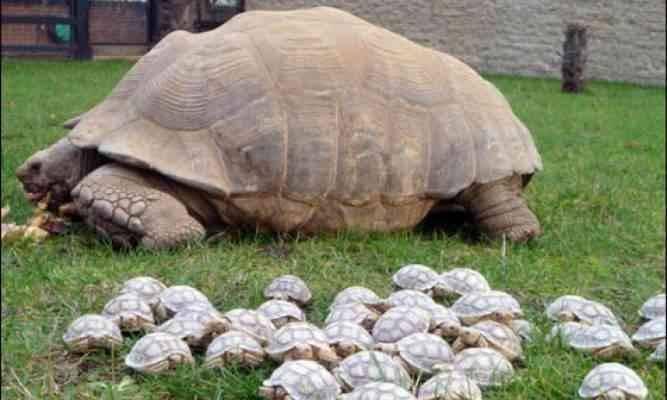معلومات عن السلاحف