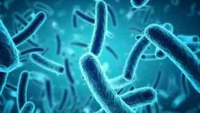 Photo of حقائق عن البكتريا .. تعرف عليها لتفيدك في حياتك