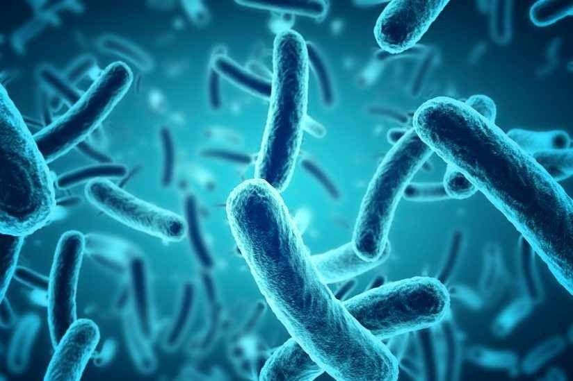 حقائق عن البكتريا
