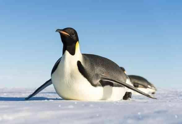 سرعة البطريق
