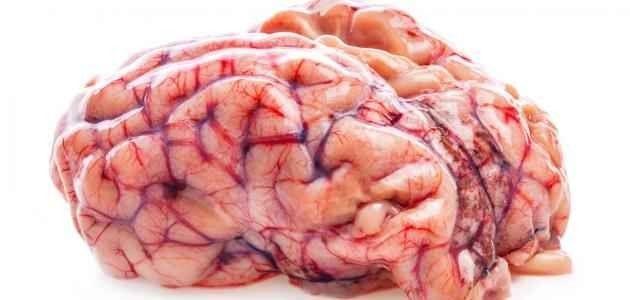اضرار اكل مخ الخروف