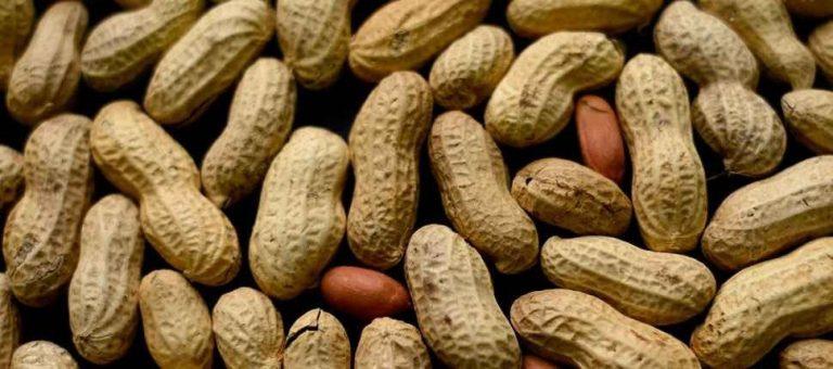 فوائد واضرار اكل الفول السوداني