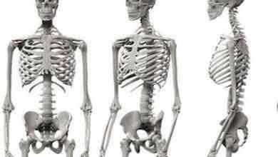 Photo of معلومات غريبة عن الهيكل العظمي .. حقائق وغرائب عن الهيكل العظمي تعرفها لأول مرة