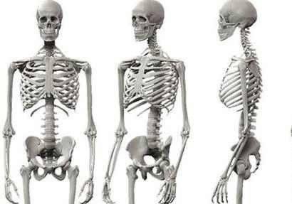 معلومات غريبة عن الهيكل العظمي