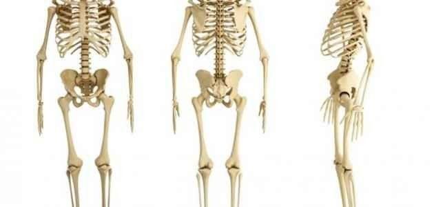 تقوّي العظام