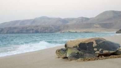 Photo of السياحة في ولاية صور سلطنة عمان .. الأماكن السياحية فى ولاية صور ..