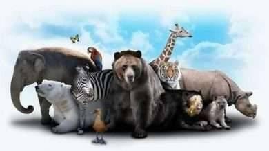 Photo of معلومات غريبة عن الحيوانات .. معلومات مثيرة للغاية تعرفها لأول مرة عن عالم الحيوانات