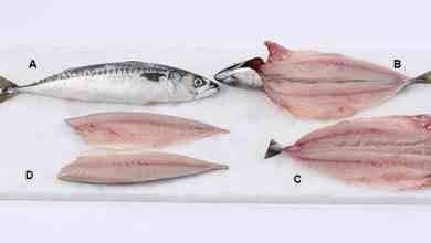 Photo of طريقة تنظيف السمك بالصور .. خطوة بخطوة