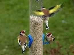 Photo of افكار لاطعام الطيور .. اليك أكثر من فكرة يمكنك تنفيذها لاطعام الطيور