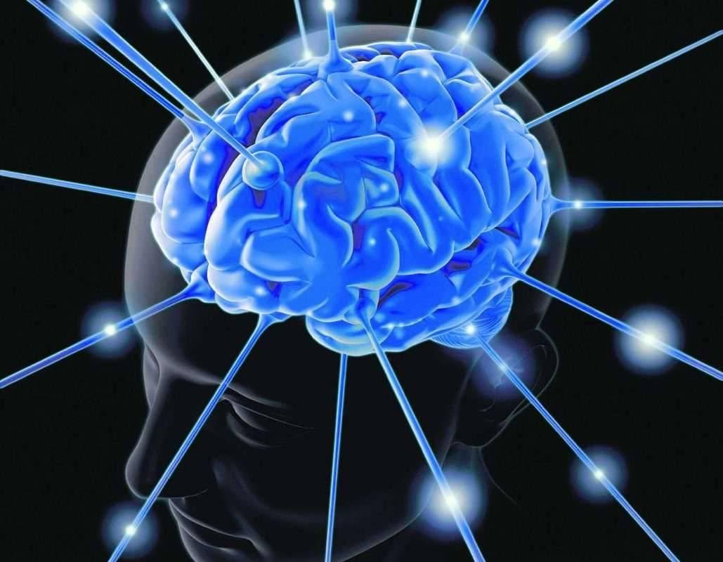 وصفات نبات الجنسنج لتحسين الذاكره- فوائد الجنسنج للذاكرة