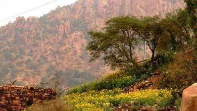 Photo of الطبيعة في الطائف… تعرف على الطبيعة الخضراء لمدينة الطائف