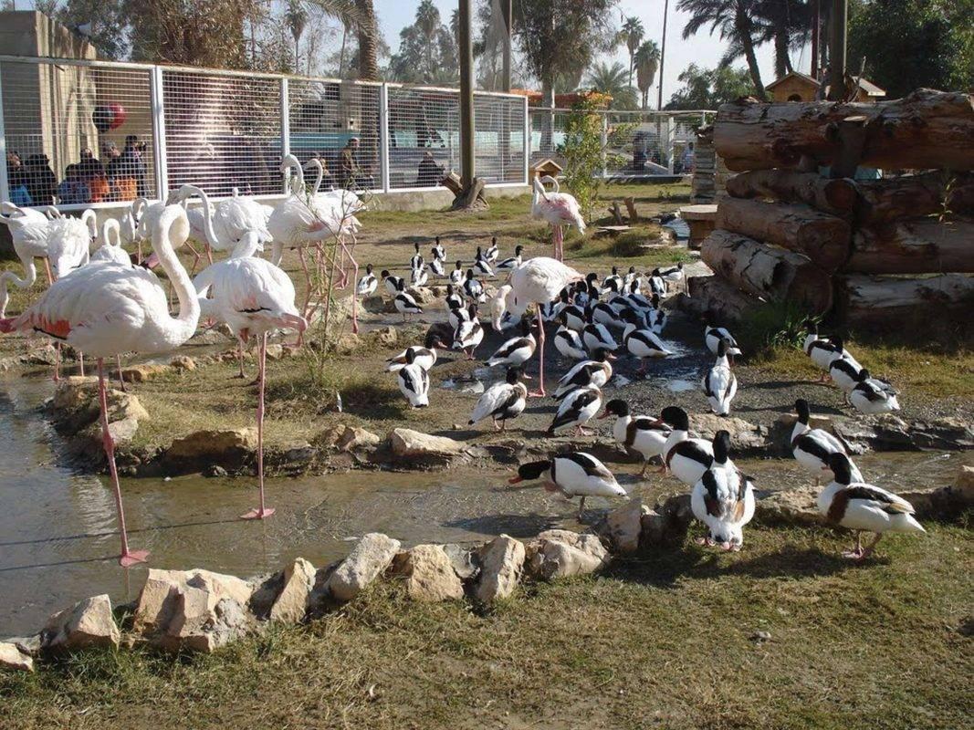 تقسيمات الحديقة - منتزهات الطيور المائية