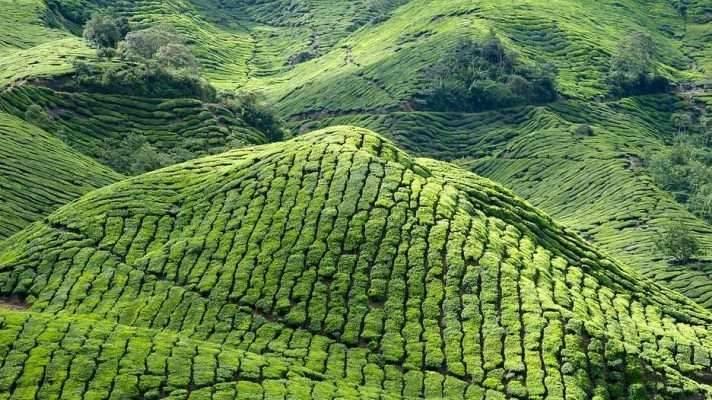 افضل وقت لزيارة مرتفعات الكاميرون