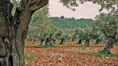 Photo of الطبيعة في فلسطين .. معلومات عن جمال الطبيعة فى فلسطين ..