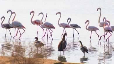 Photo of الطبيعة فى الامارات .. تعرف على اهم المناطق الطبيعية