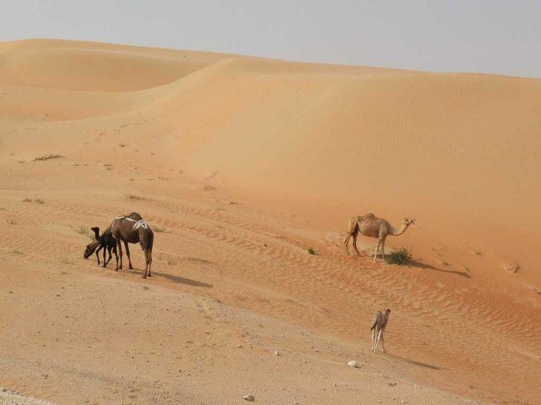 واحة ليوا .. الطبيعة في ابو ظبي