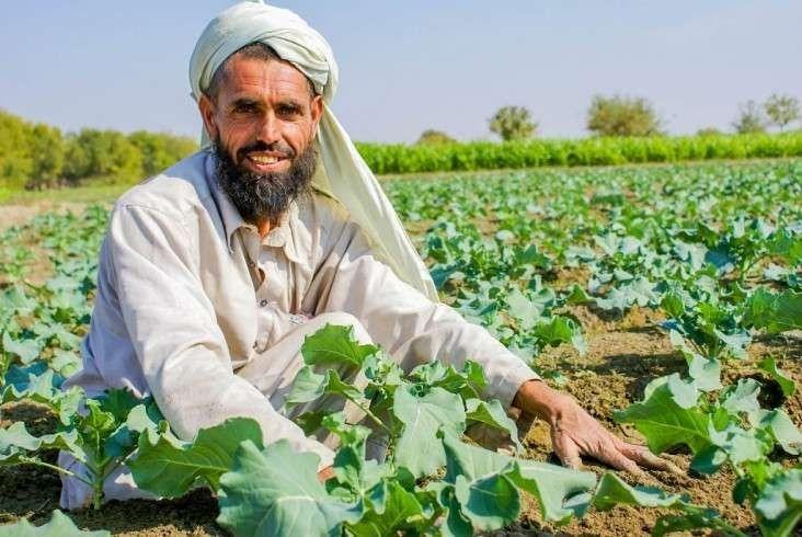الزراعة في أفغانستان