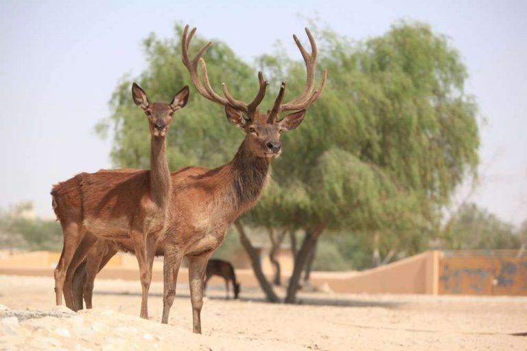 - عوامل الجذب في حديقة العرين البرية