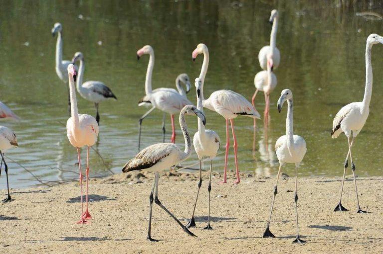 محمية الوثبة المائية .. الطبيعة في ابو ظبي