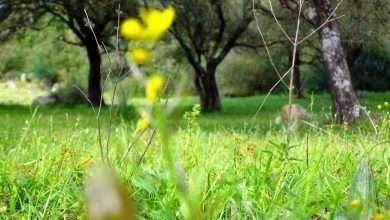 Photo of الطبيعة في الجزائر… ثلاث محميات طبيعية خلّابة في الجزائر
