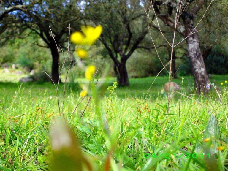 الطبيعة في الجزائر