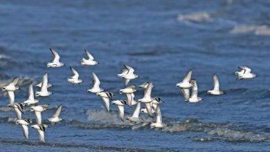 Photo of معلومات للأطفال عن الطيور … تعرف على أبرز الحقائق الهامة عن الطيور