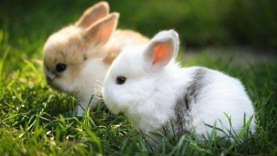 Photo of معلومات للأطفال عن الأرنب… دليلك الكامل للتعرف على معلومات مهمة عن الأرانب