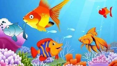 Photo of معلومات للاطفال عن السمك .. مجموعة معلومات عن الأسماك تناسب طفلك ..