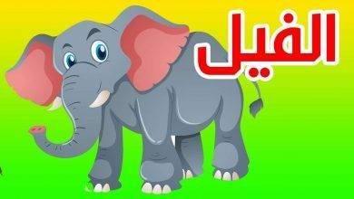 Photo of معلومات للاطفال عن الفيل .. معلومات عن الفيل صديق الأطفال ..