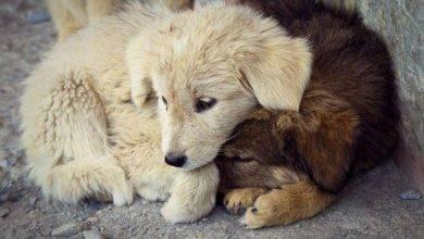 صورة التعامل مع الحيوان و الرفق به