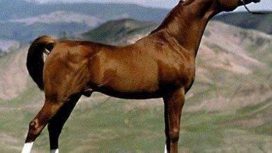 Photo of معلومات للاطفال عن الحصان .. أفضل المعلومات عن الحصان للأطفال ..