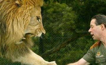 Photo of التعامل مع حيوان الأسد