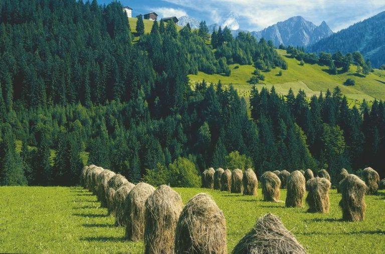 معلومات عن دولة النمسا