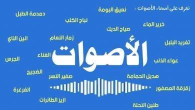 Photo of أسماء الأصوات في اللغة العربية ..تعرف على أسماء أشهر الأصوات في اللغة العربية