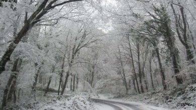 Photo of غابات بلغراد في الشتاء ..تعرف على أبرز مظاهر الشتاء في غابات بلغراد