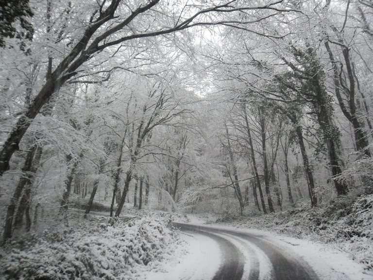 غابات بلغراد في الشتاء