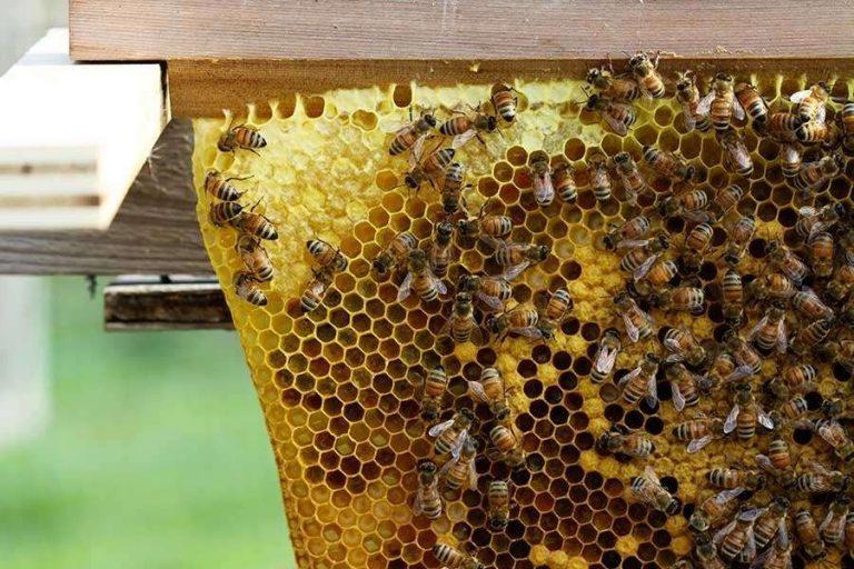 تغذية النحل في الشتاء