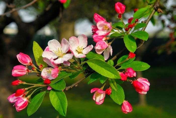 مميزات فصل الربيع للاطفال