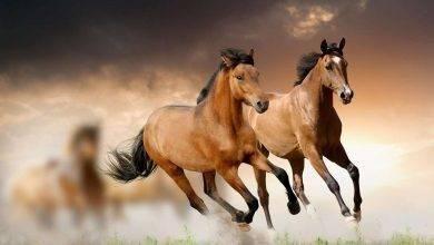 Photo of معلومات للأطفال عن الحصان… إليك 34 معلومة مبسطة عن الحصان من أجل طفلك