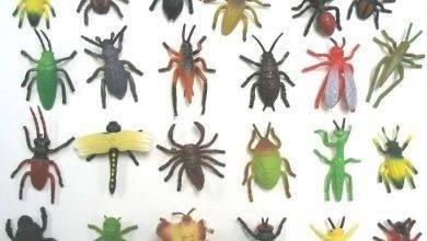 Photo of معلومات للاطفال عن الحشرات .. تعرف على أهم المعلومات البسيطة عن عالم الحشرات